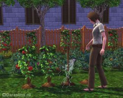 Гид по садоводству в Симс 3