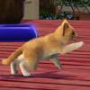 Превью «Sims 3: Pets» от GameZone