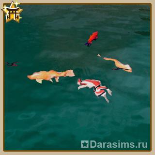 Китай - квест «Рыба для мудреца»