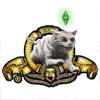 «Симсские львы» выбрали профессионалов