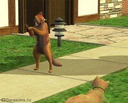 Брачный танец котов [The Sims 2]