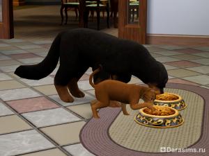 Приготовление еды для питомцев в «The Sims 3 Pets»