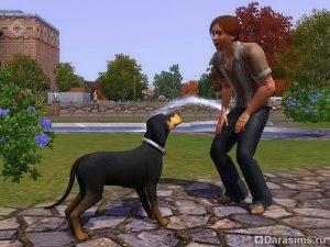 Дрессировка и трюки в «The Sims 3 Pets»