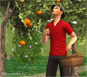 Садоводство в «The Sims 2 Seasons»