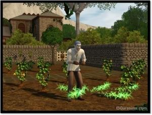 Зеленые дракончики: искатели сокровищ и непревзойденные садоводы