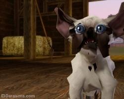 Кошак [The Sims 3]