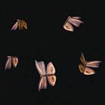 Эффекты генератора тумана в Симс 3 - животные, птицы, насекомые, рыба, рыбалка
