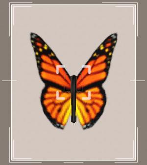 Энтомологическая коллекция насекомых в Симс 3