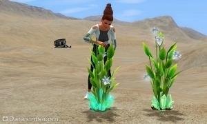 Хрустальные растения в Симс 3 Вперед в будущее