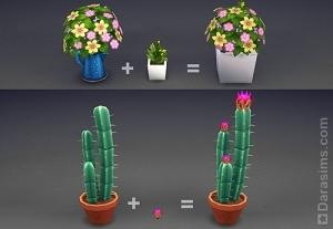 горшки с цветами и кактусы