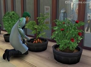 Садоводство в Симс 4