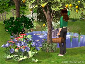 общественный сад в симс 2