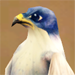 Голубой сокол