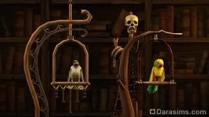 Квестовые попугай и сокол