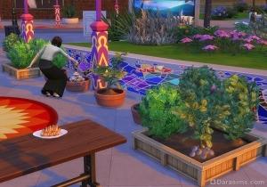 Урожай фруктов и овощей на фестивале специй