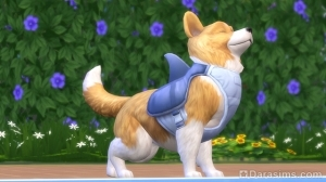 собака в The Sims 4 Кошки и собаки