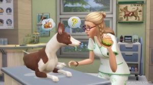 работа ветеринаром