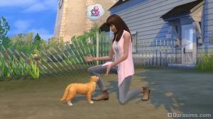игра с питомцем в The Sims 4 Кошки и собаки