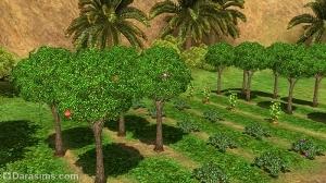 Садоводство в Аль-Симаре