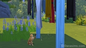 Кот ловит капли с белья на верёвке