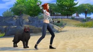 Сим обучает собаку команде Принести