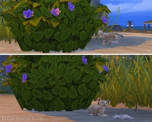 Кошка исследует кусты