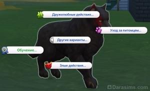 Обучение в меню действий у собак