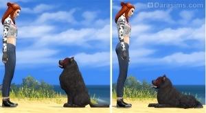 Дрессировщица обучает пса командам Сидеть и Лежать