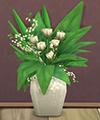 Дюжина белых роз
