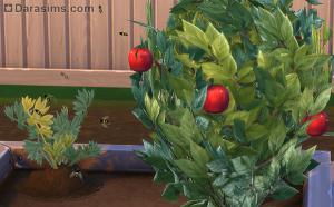 Пчелы опыляют растение в Симс 4 Времена года