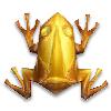 Золотая лягушка с йонкилистом и солнечными лучами