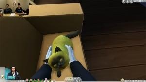 Сим гладит кота от первого лица