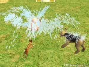 Собаки повышают гигиену у разбрызгивателя