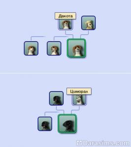 Генеалогическое древо собак