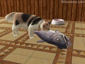 Кот ест пойманную рыбу