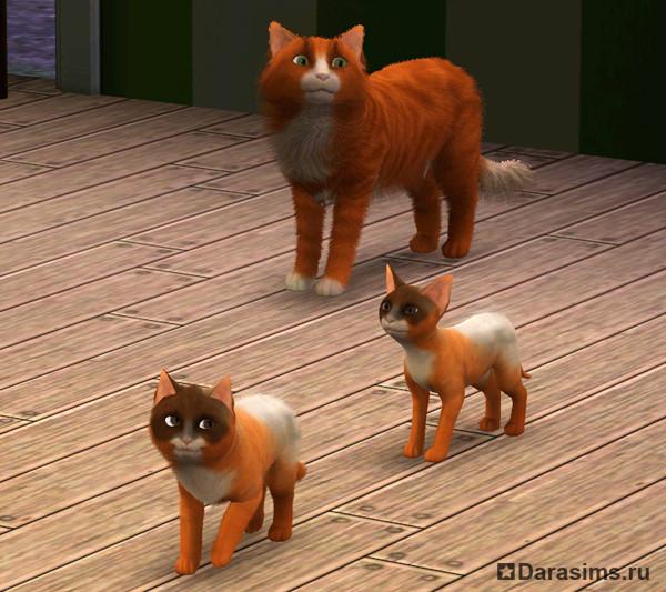 Собаки в The Sims 3 Питомцы (Симс 3 Собаки - Большая) 27