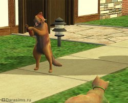 ������� ����� ����� [The Sims 2]