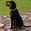 ����������� � ����� � �The Sims 3 Pets�