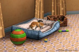 ������ � ����� � �The Sims 3 �������