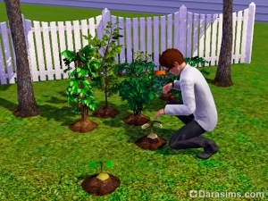 Персонажи-растения (плантсимы) в «Симс 3 Студенческая жизнь»